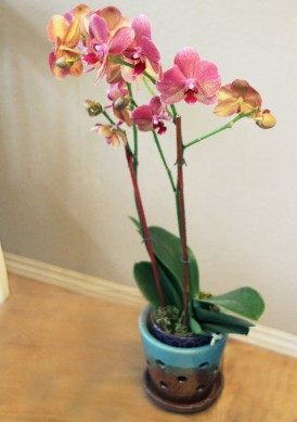 Orchid n Pot_6379