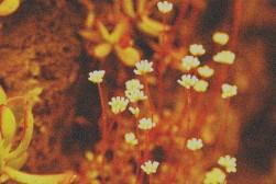 cactusflowersMod0451