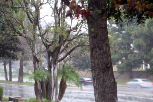 Rain1stMarch2014_1625