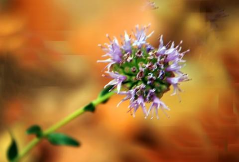 wildflowerRedCanon_2823
