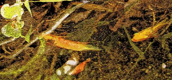 fishModRainforestHuntington