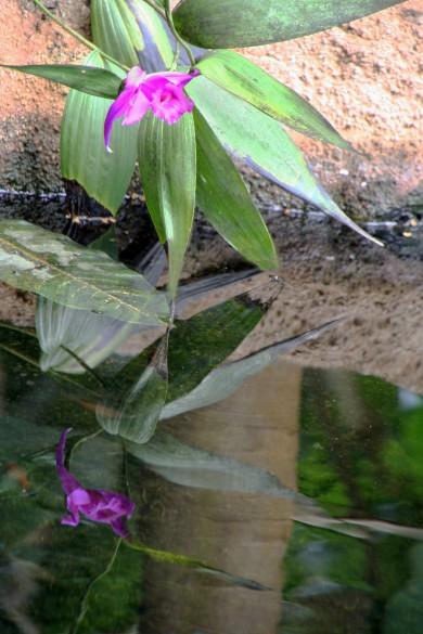 flower rainforest6652