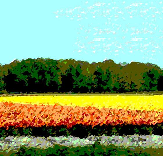 TulipfieldsMod_1180