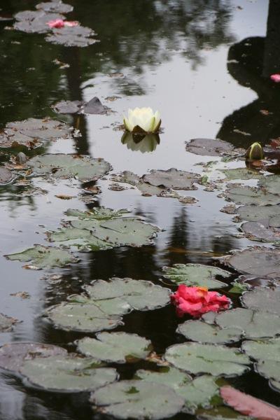 WaterliliesHunt_0665