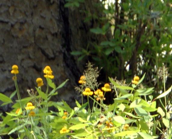 WildflowersWEntrance2182