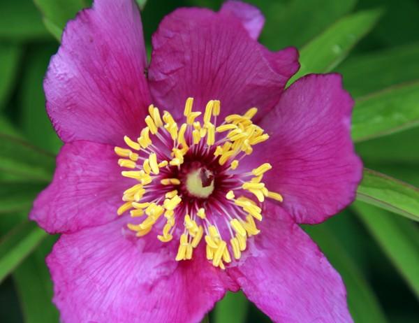 FlowerHortus_1049