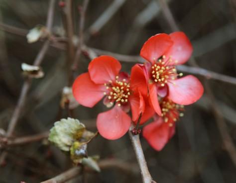 Flowers_0083