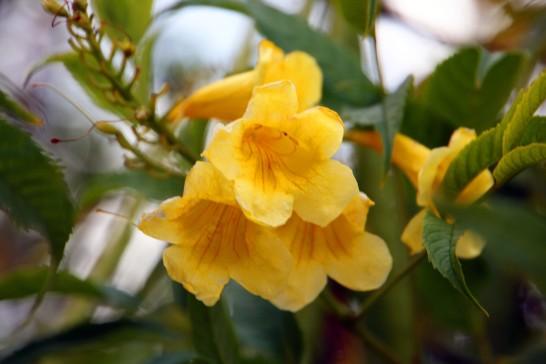 FlowersSanDiego_9955