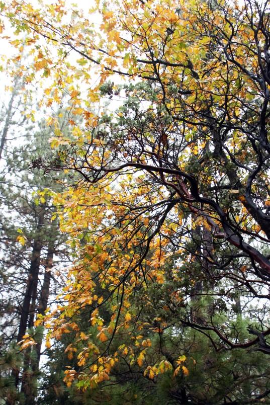 Fall Rain_2946
