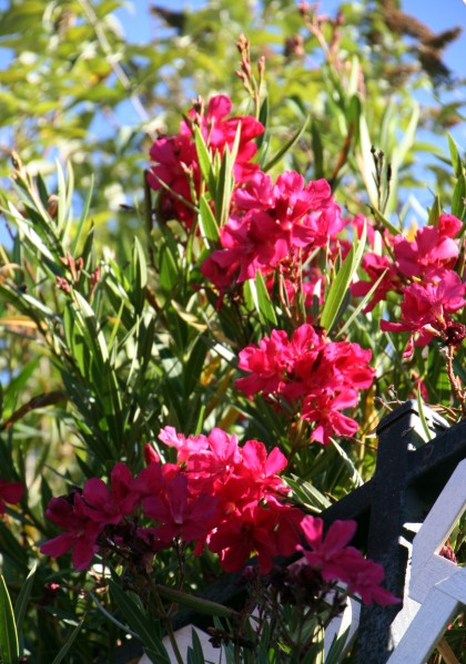 Flowers_2162