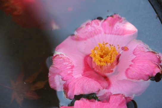 FlowerSubmerged_9232