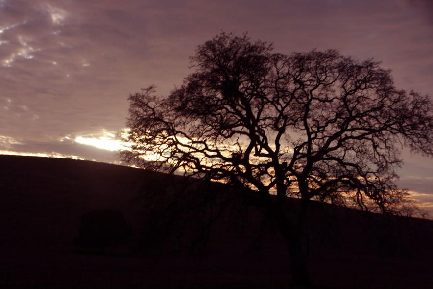 Tree inSunset_3632