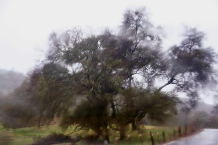 TreeinFog_3192