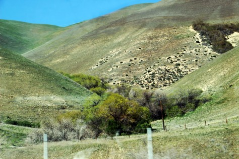 Fences on Hills_0062
