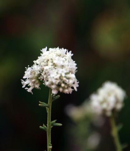 Flower Utah_2976