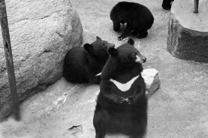 PandasChina 319