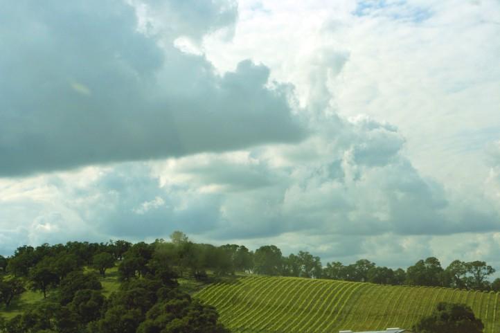 Vineyard BrightSkies_1808