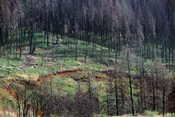 Burnt Trees_1709