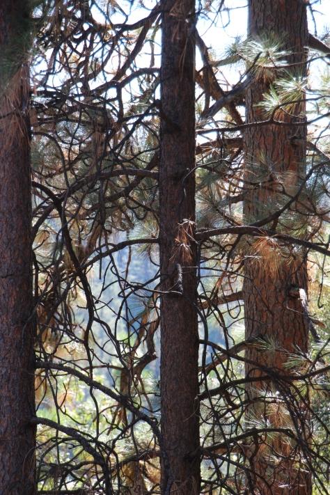 Tree in Fall Backyard_3476