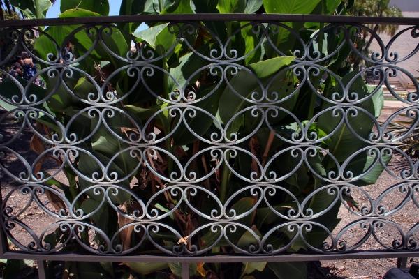 Fence Botanical SanD_7244