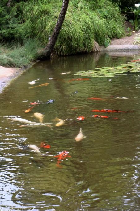 FishinWater_0550