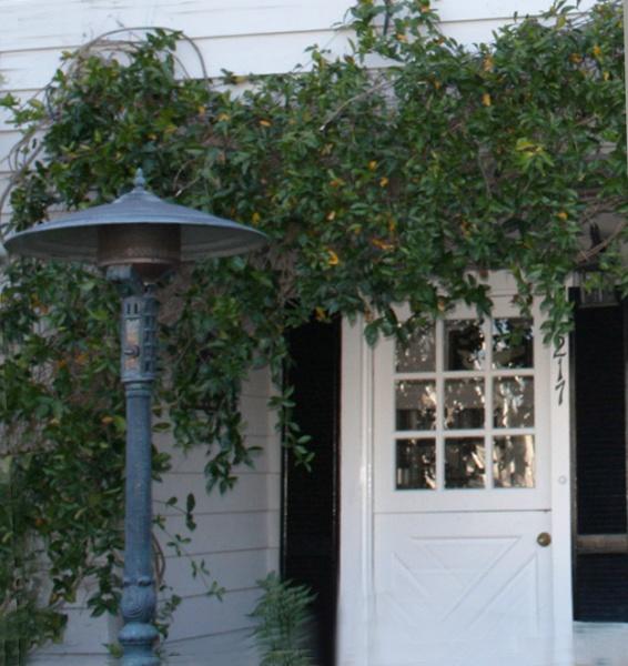 Reflectbeach Door-vine
