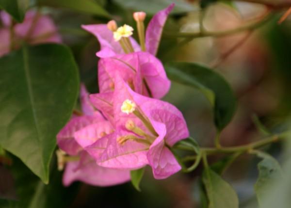 Variegated Flower_9362