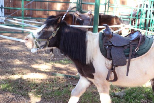 pony ride_3386