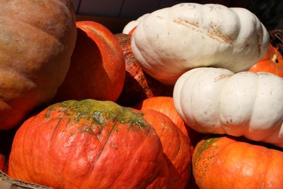 Pumpkinsin2015__3054