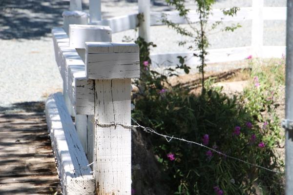 White Fence_1562