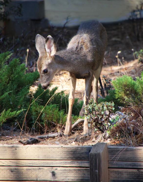 Bambi_3058