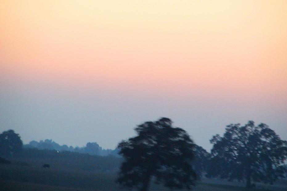 Sunset 2 Trees_3655