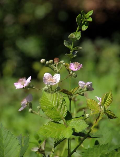 wildflowers_1078