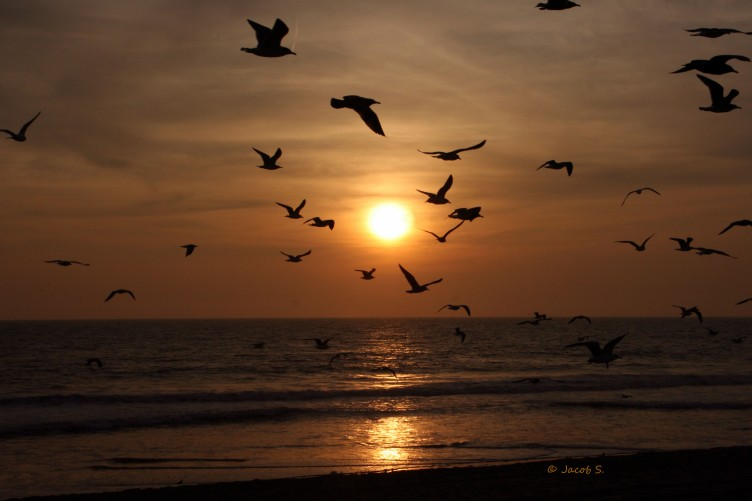 Sunset2Birds_9419