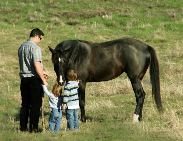 Feeding3thehorse_9262