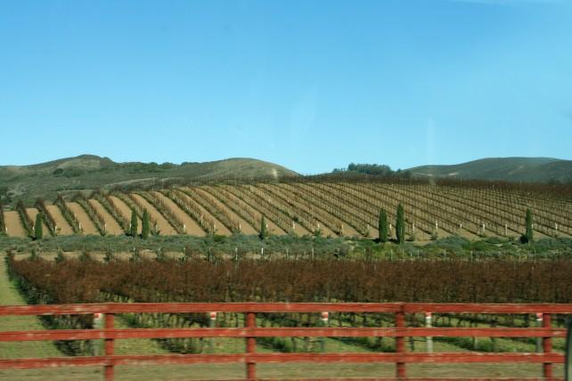 Fieldsprep with Fence_1349