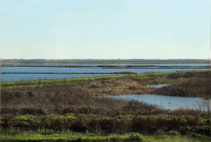 Marshes_5329