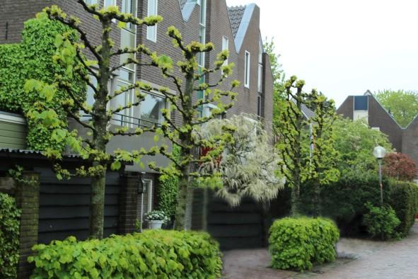 MuidenlaceTrees_0660