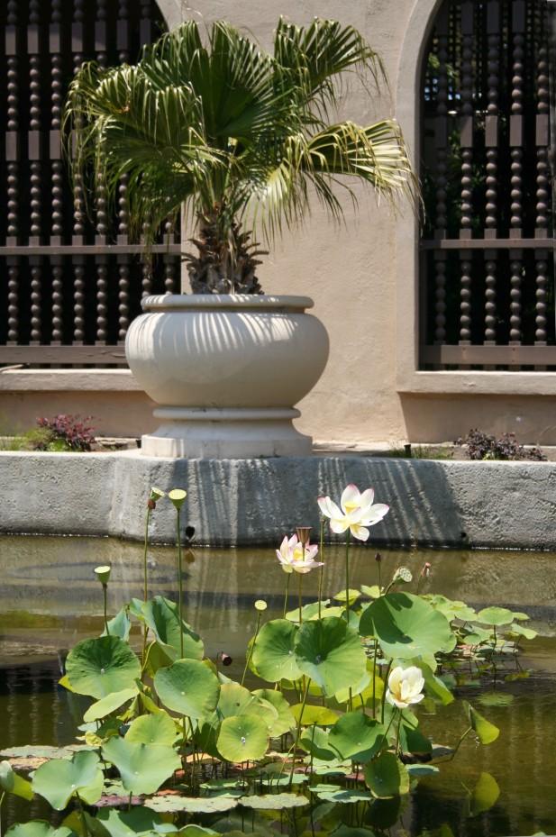 WaterliliesSanD 290