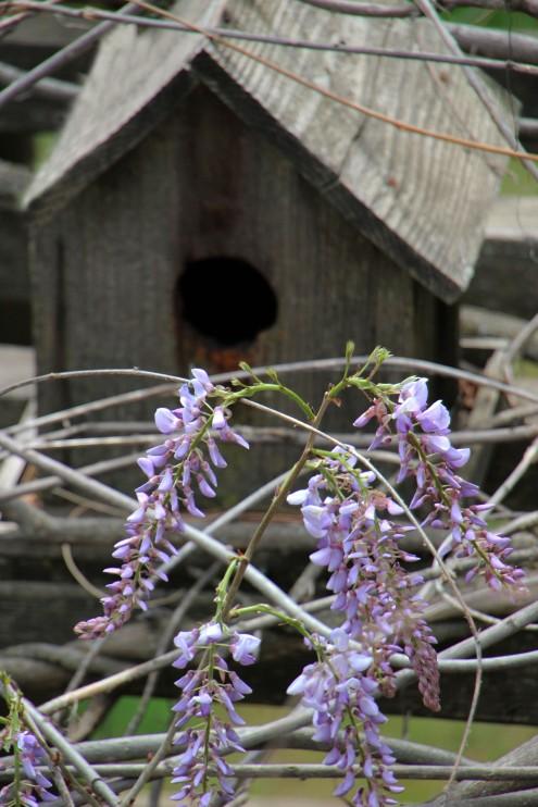 Birdhouse2Wisteria_0321