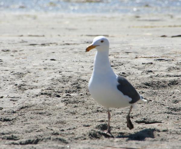 BirdWalk_5855