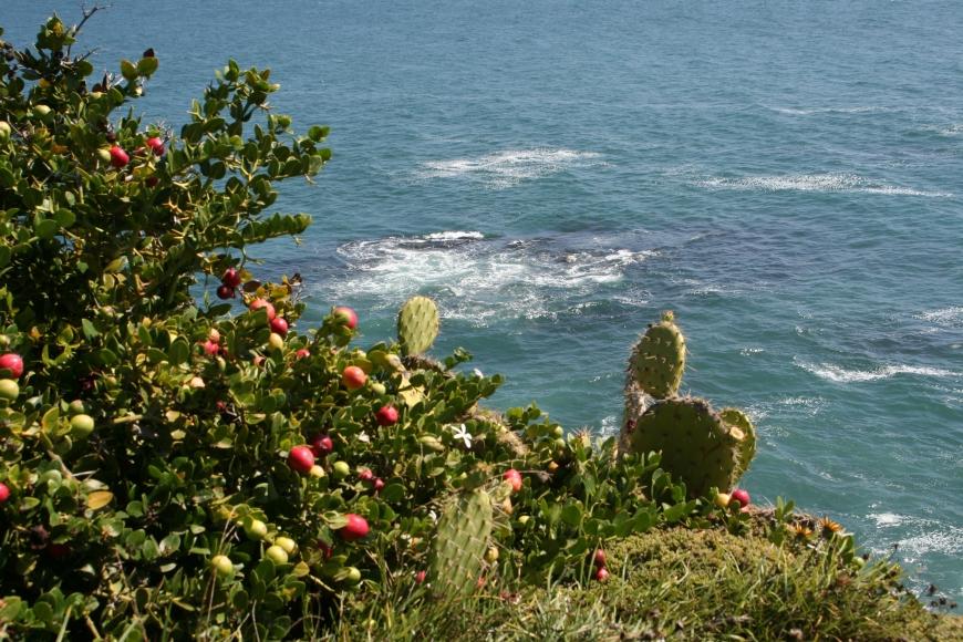 Blooming Cacti031