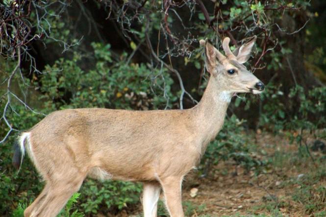 deer sideways
