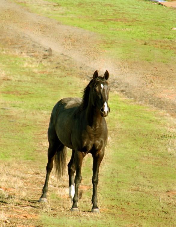 HorseMeadowHouse_9258