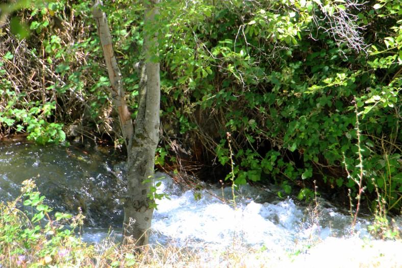 Waterstream_1561