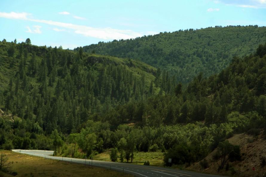 GreenTrees_8162