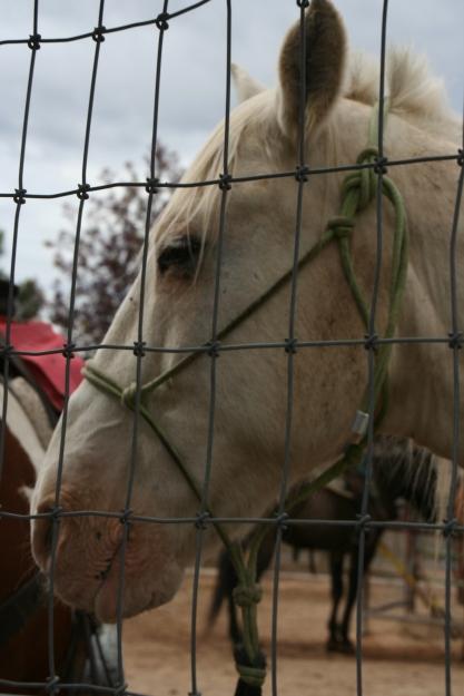 white horse_7955