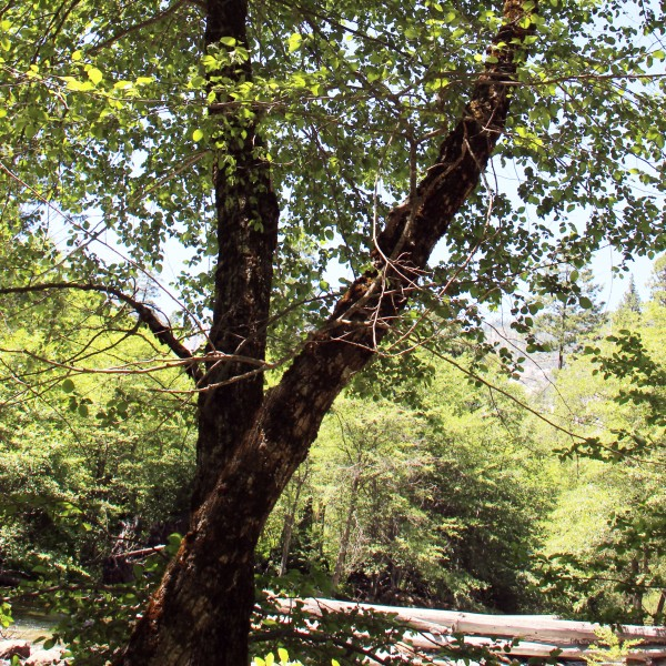 X-treetrunks_1672