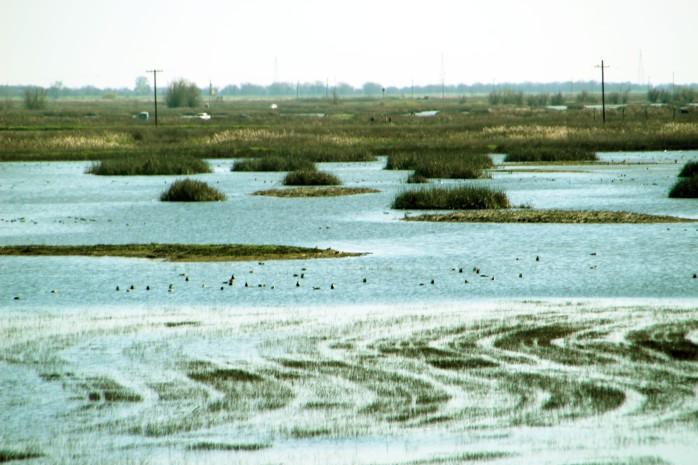 Water n Birds_5280