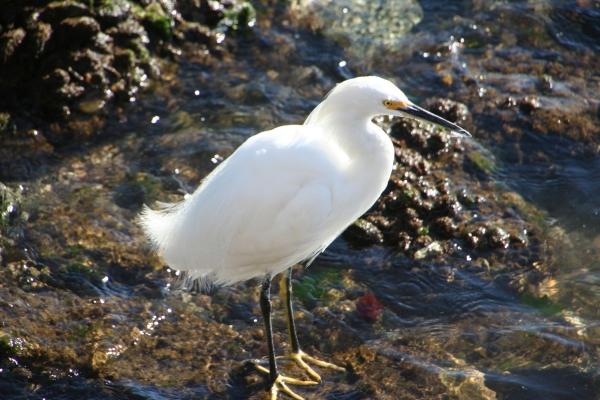 BIRD & Water_5710